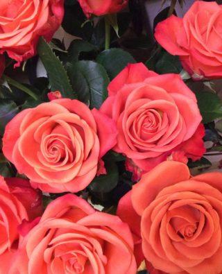 Розы №9