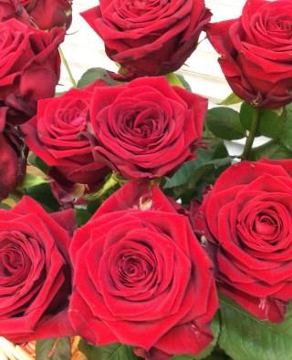 Розы №21