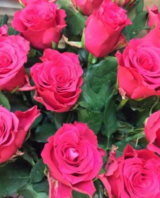 Розы №32