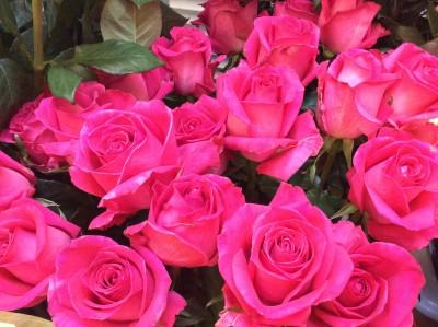 Розы №14
