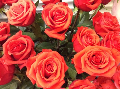 Розы №16