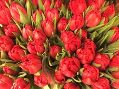 Тюльпаны №1