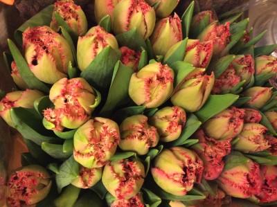 Тюльпаны №2