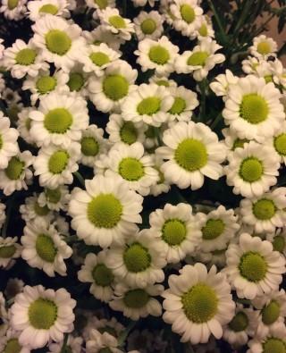 Хризантемы №2