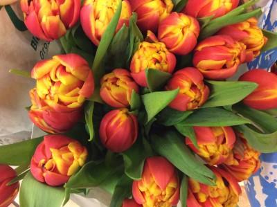 Тюльпаны №7