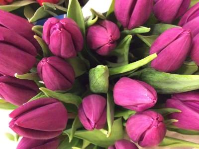 Тюльпаны №8