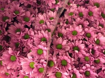 Хризантемы №9