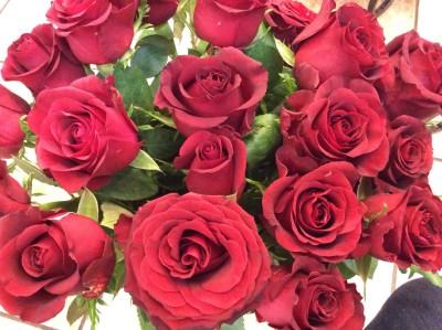 Розы №11