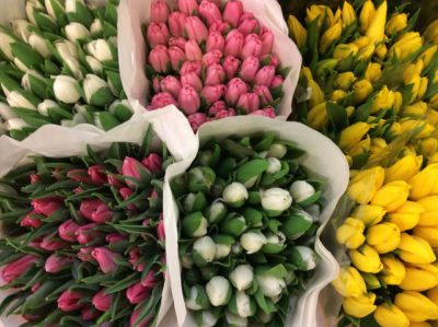 Огромное поступление сортовых тюльпанов!