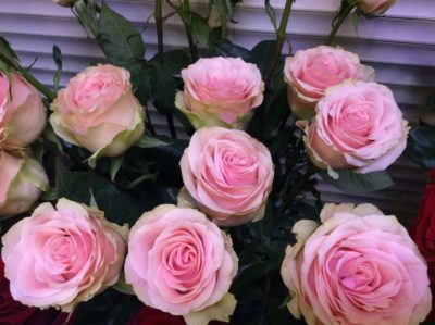 Розы №43