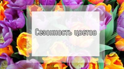 Сезонность цветов